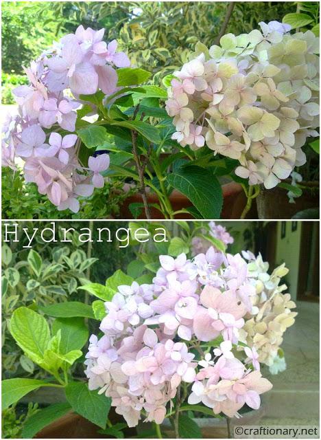 hydrangea-home-entrance-decor