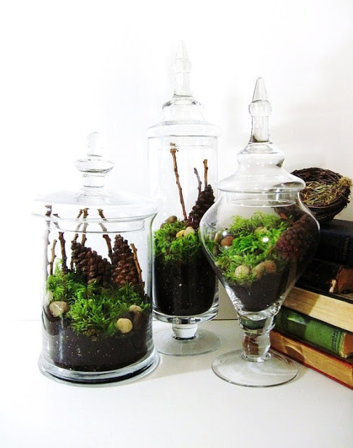 terrarium jars display
